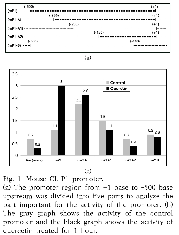 Fig. 1. Mouse CL-P1 promoter.