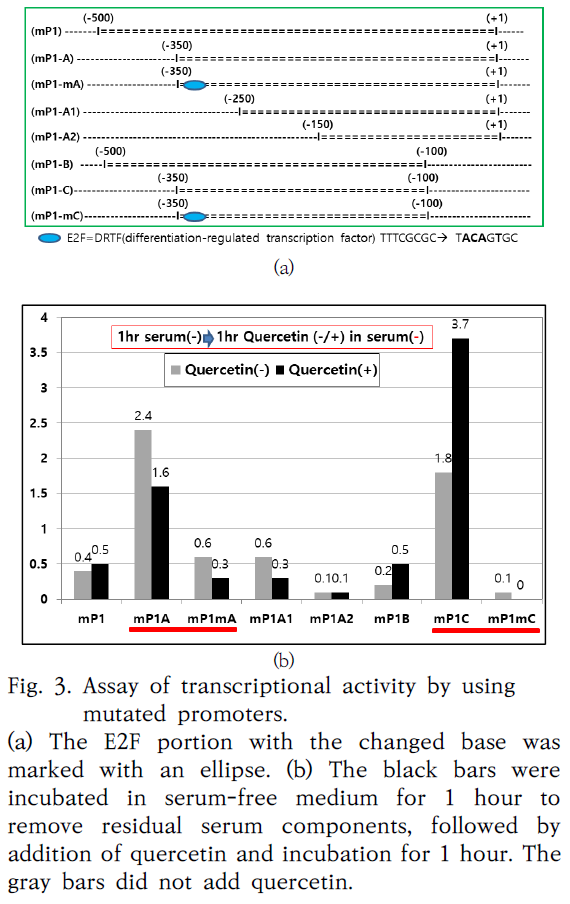 Fig. 3. Assay of transcriptional activity by using mutated promoters.