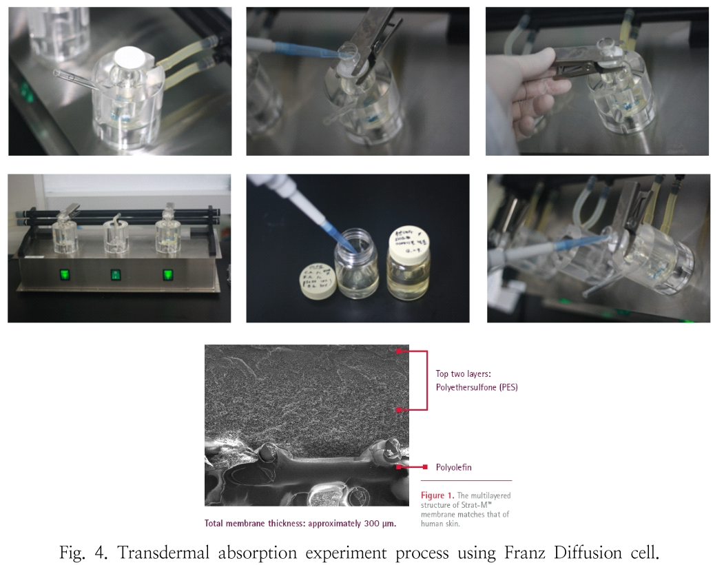 Fig. 4. Transdermal absorption experiment process using Franz Diffusion cell.