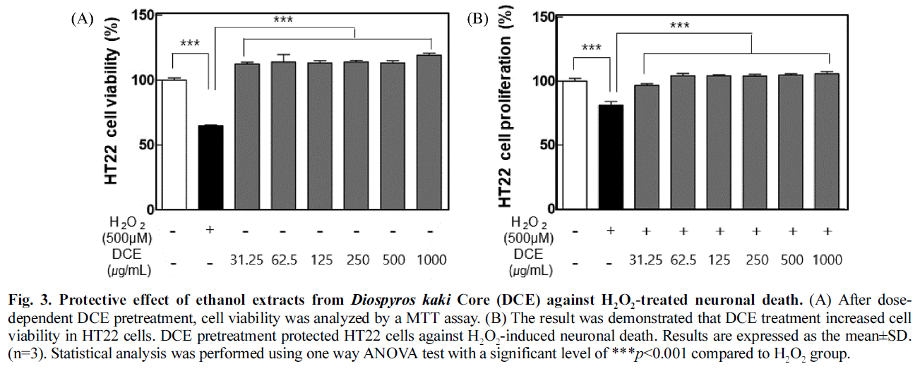 Fig. 3. Protective effect of ethanol extracts from Diospyros kaki Core (DCE) against H<sub>2</sub>O<sub>2</sub>-treated neuronal death.