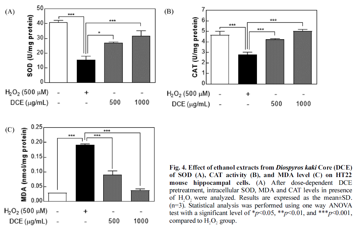 Fig. 4. Effect of ethanol extracts from Diospyros kaki Core (DCE) of SOD (A), CAT activity (B), and MDA level (C) on HT22 mouse hippocampal cells.
